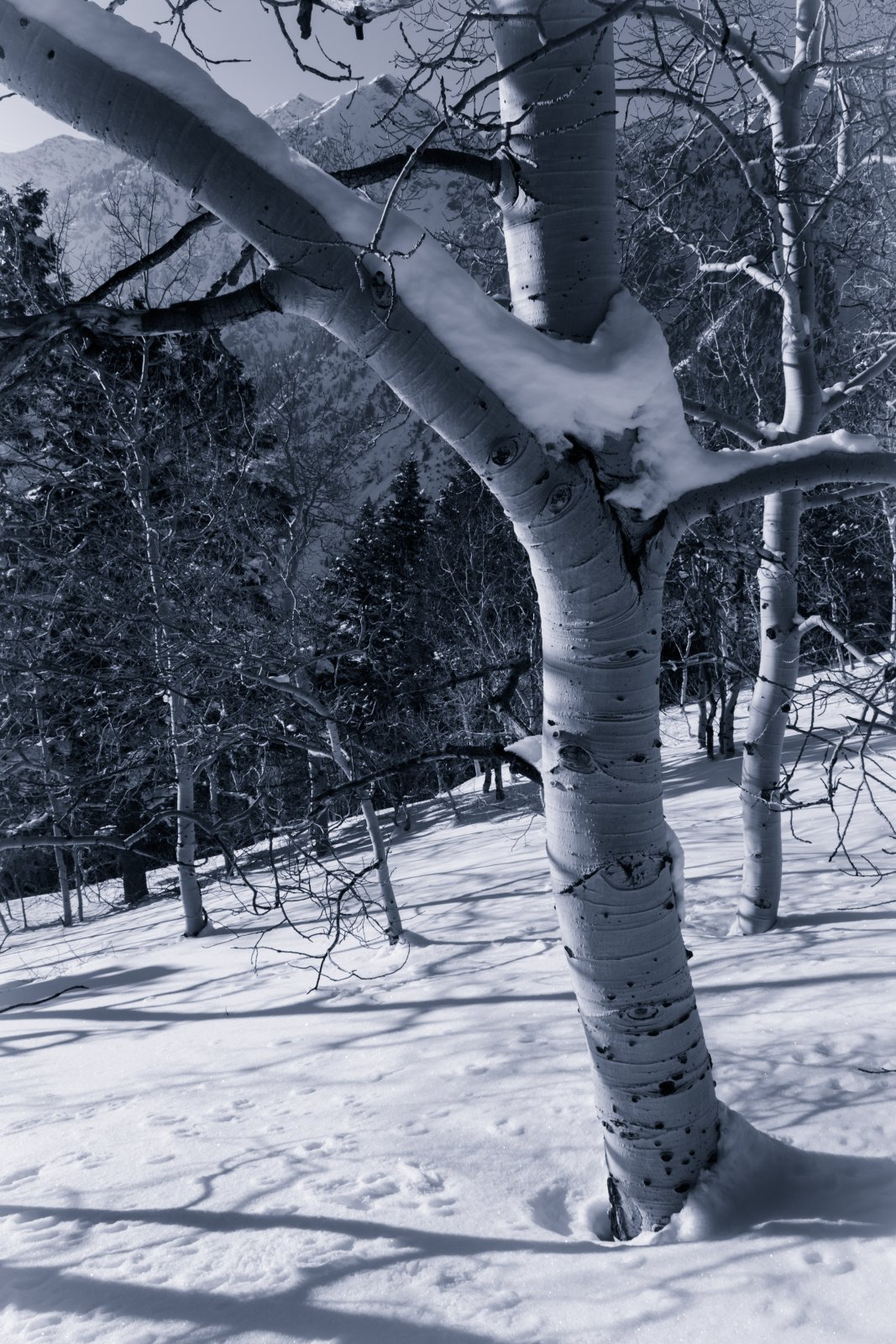 Snowshoeing With Ade0171-sm-bw.jpg