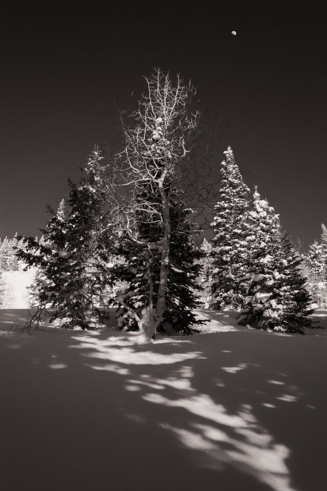 Snowshoeing With Ade0197-sm-bw.jpg