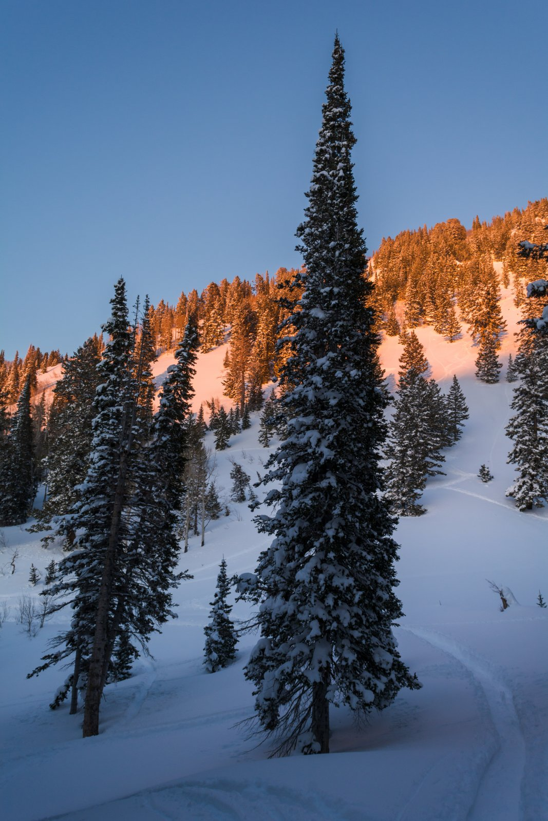Snowshoeing With Ade0224-sm.jpg