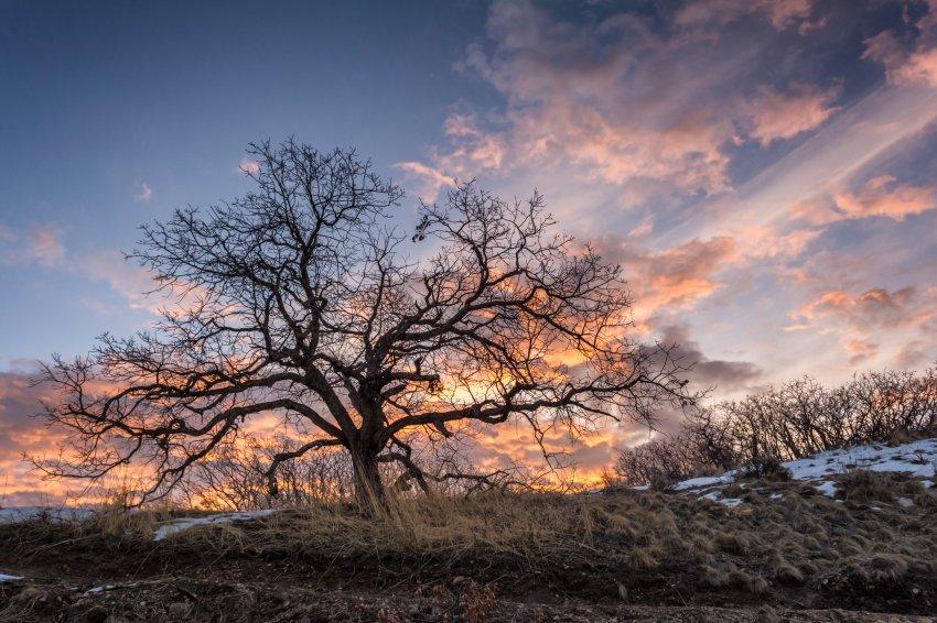 Sunrise 3-3-180038-proc.jpg