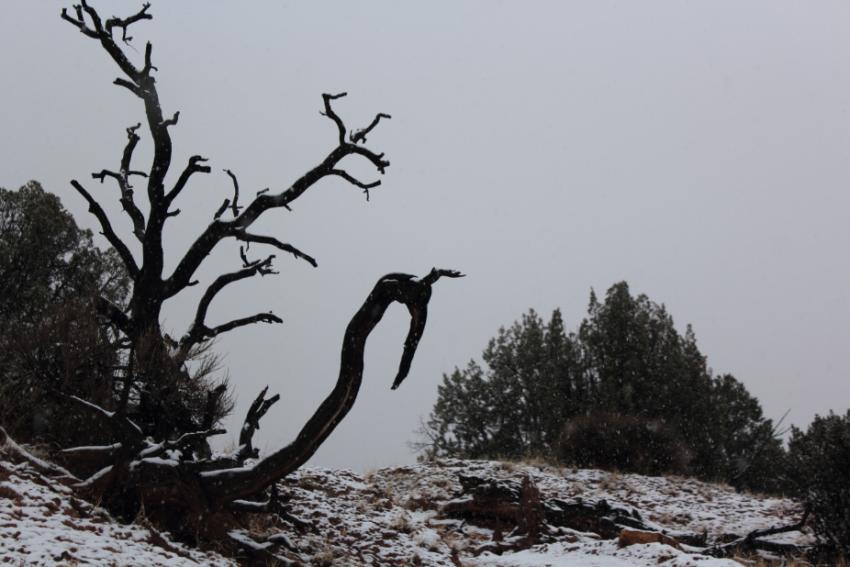 tree_Kodachrome.PNG