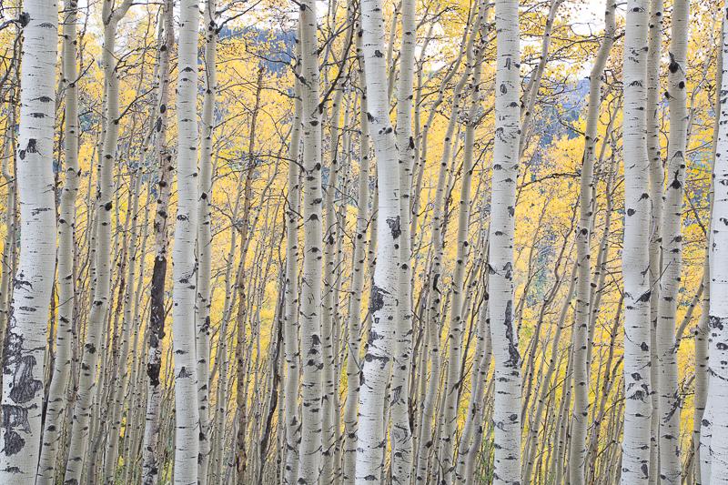 Utah Colorado-27.jpg