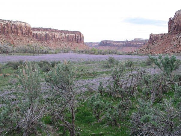 Utah Indian Creek April Bloom.jpg