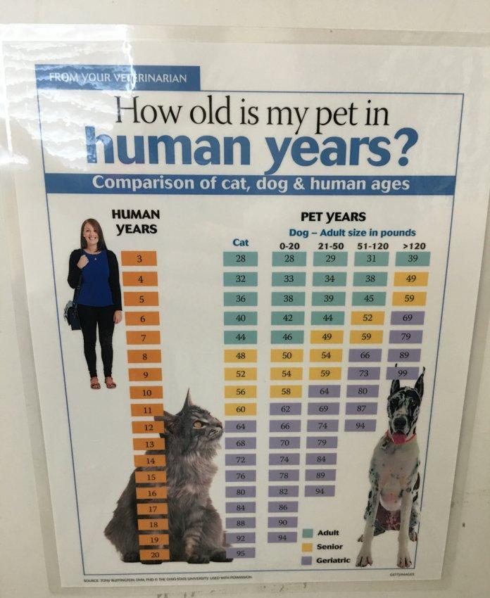 vet-chart.jpg