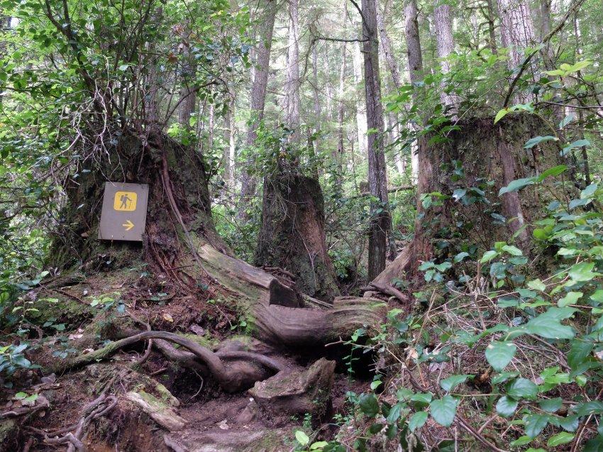 west coast trail 040.JPG