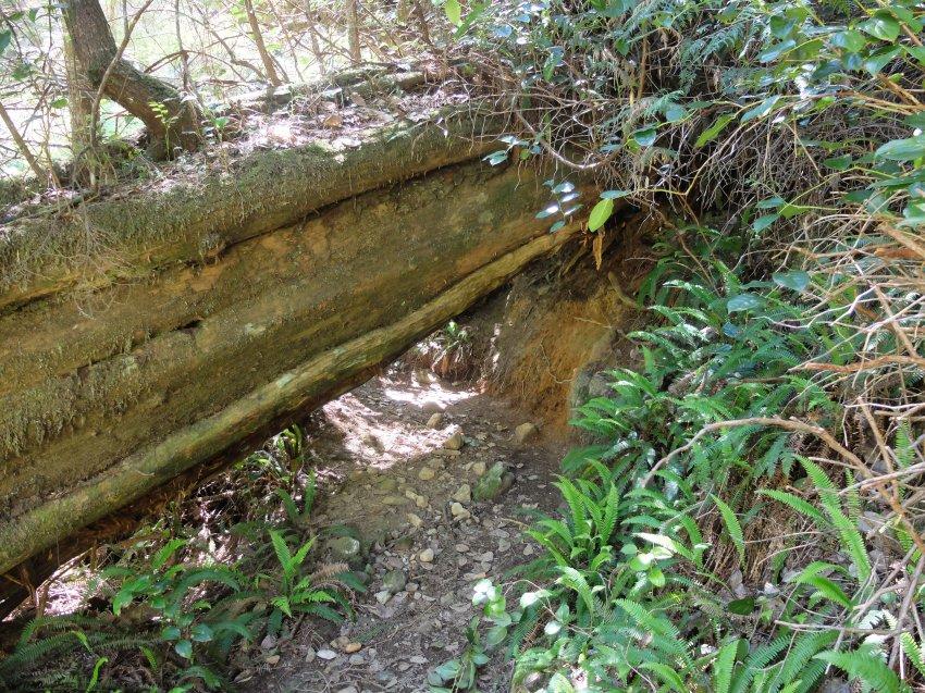 west coast trail 102.JPG