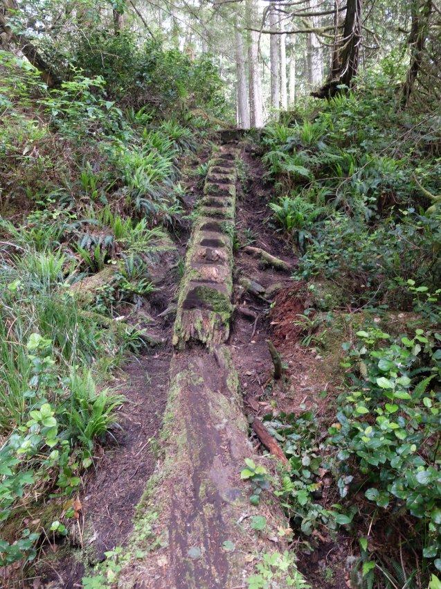 west coast trail 123.JPG