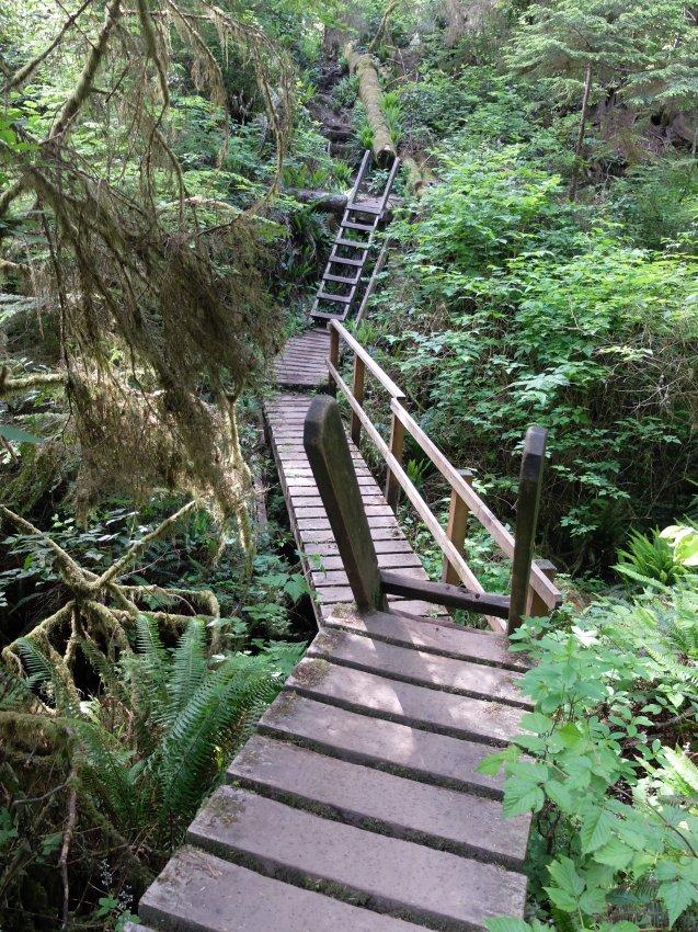 west coast trail 132.JPG
