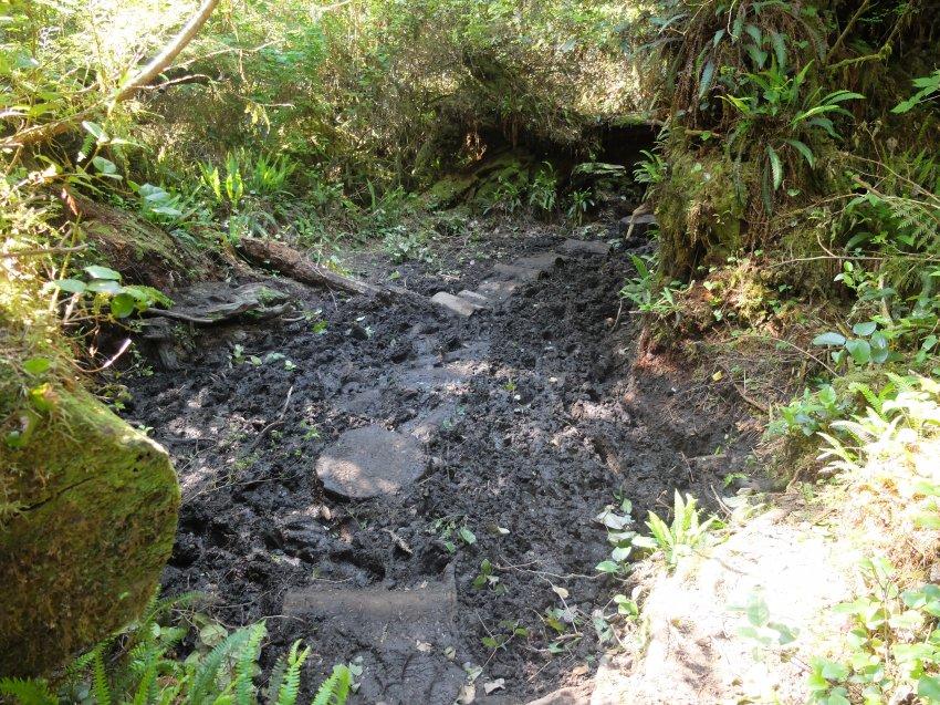 west coast trail 133.JPG