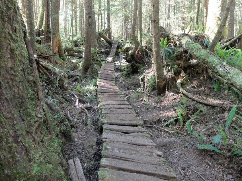 west coast trail 137.JPG