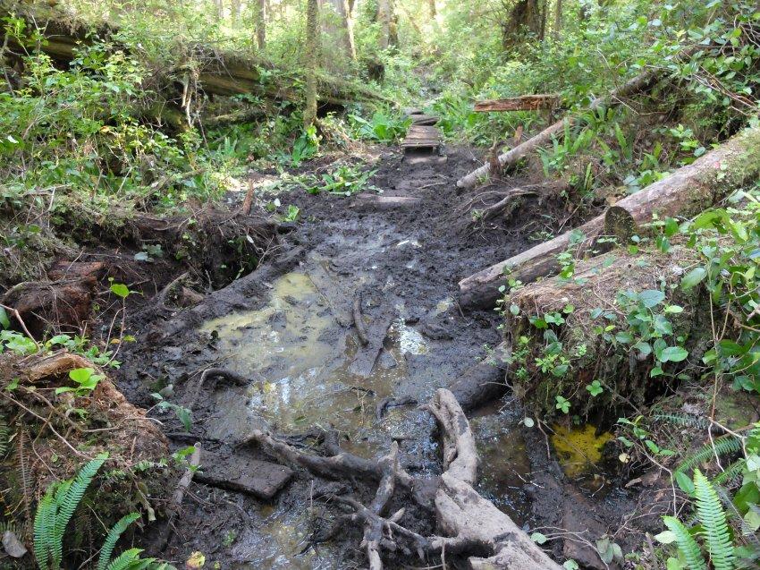 west coast trail 148.JPG