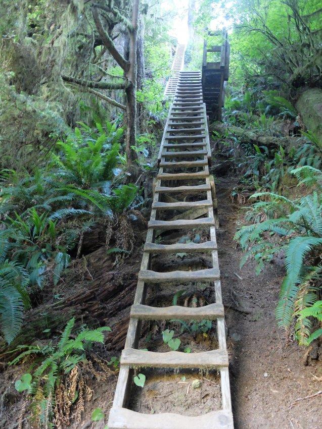 west coast trail 162.JPG