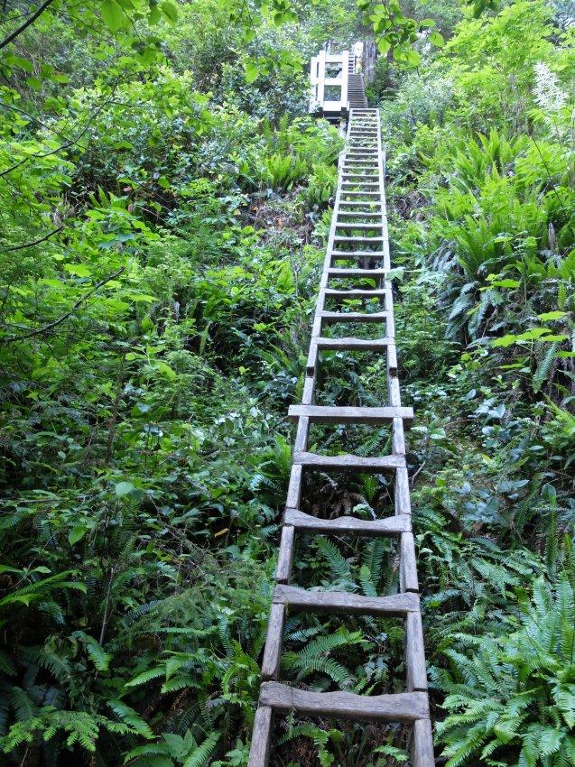 west coast trail 177.JPG