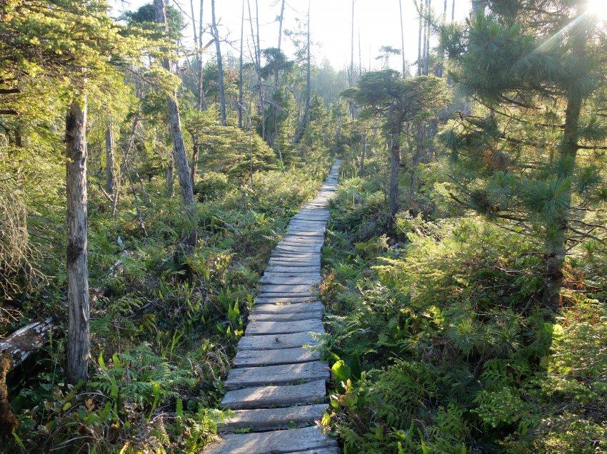 west coast trail 184.JPG