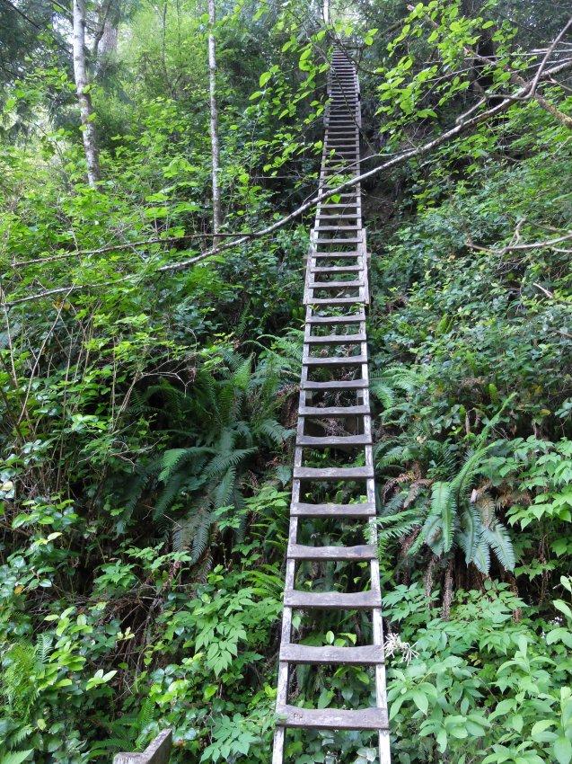 west coast trail 206.JPG