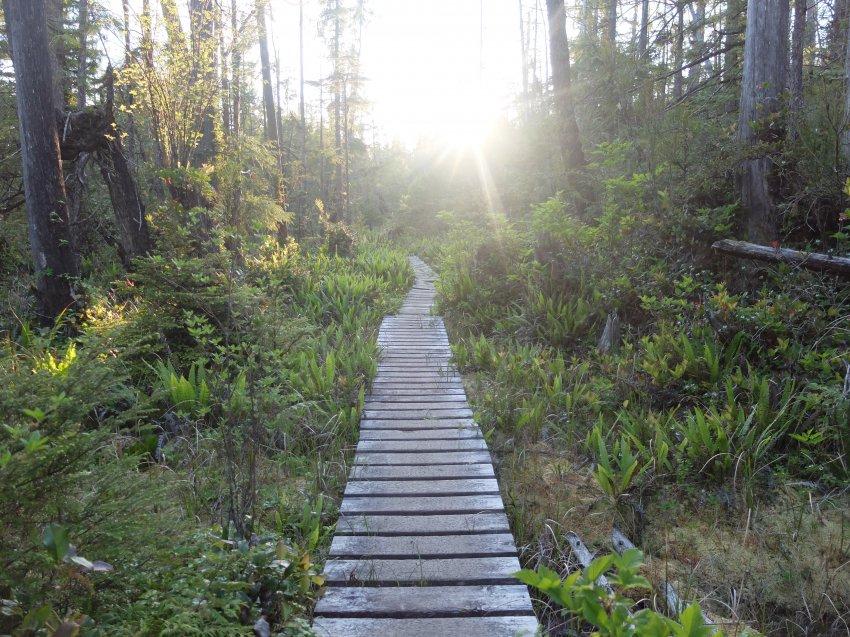 west coast trail 209.JPG