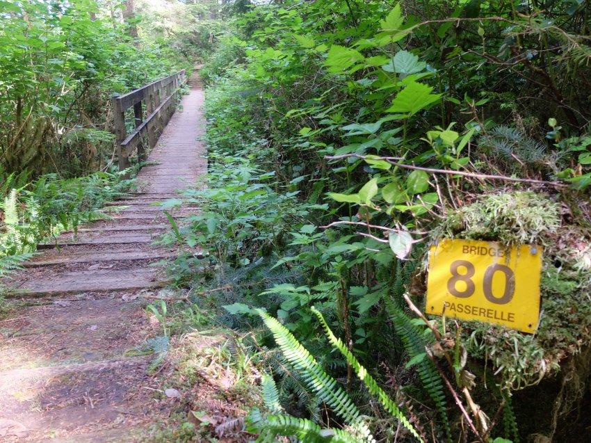 west coast trail 324.JPG