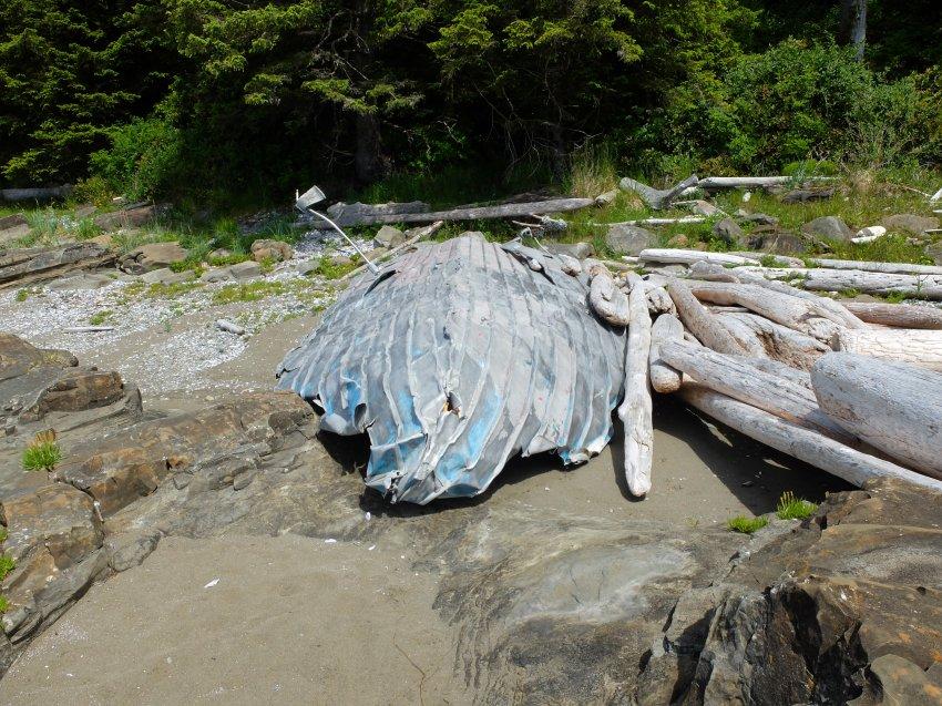 west coast trail 380.JPG