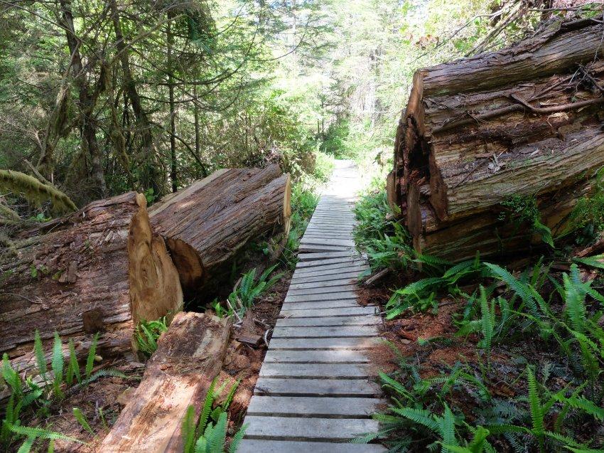 west coast trail 417.JPG