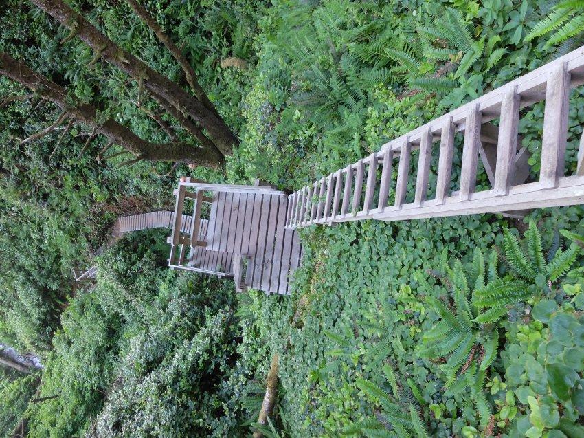 west coast trail 474.JPG