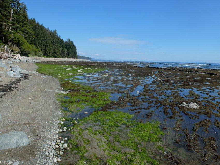 west coast trail 785.JPG