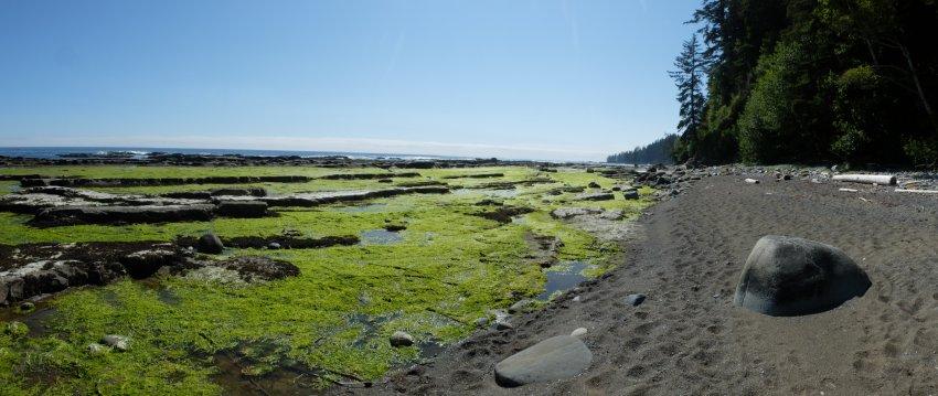 west coast trail 791.JPG