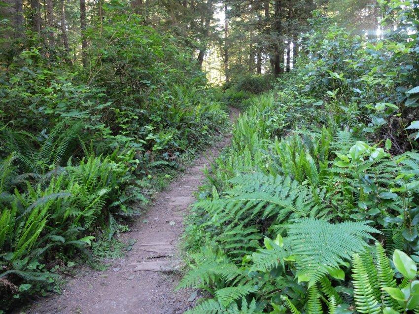 west coast trail 821.JPG