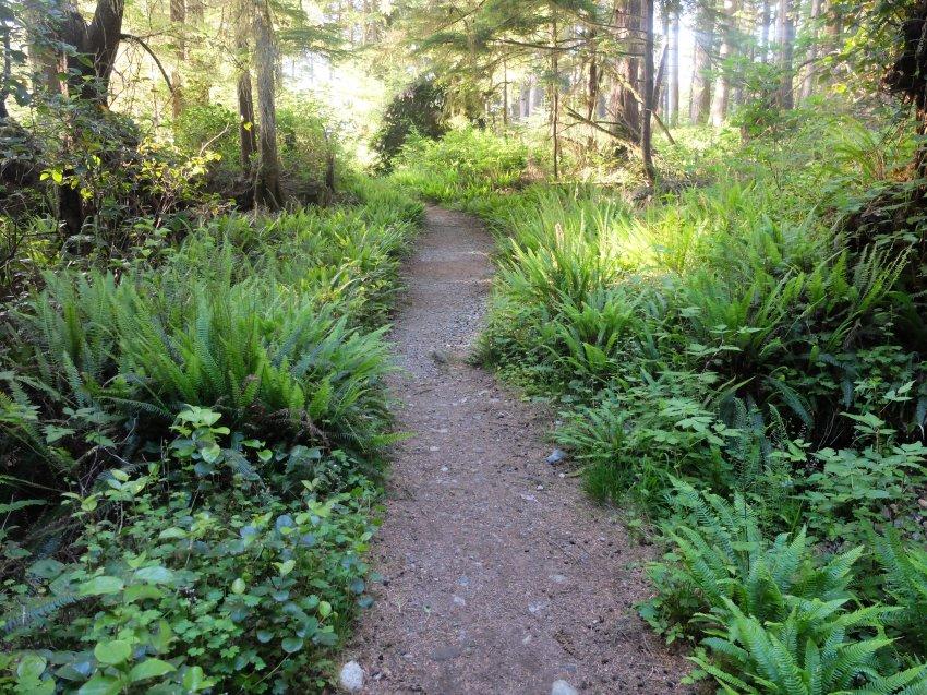 west coast trail 822.JPG