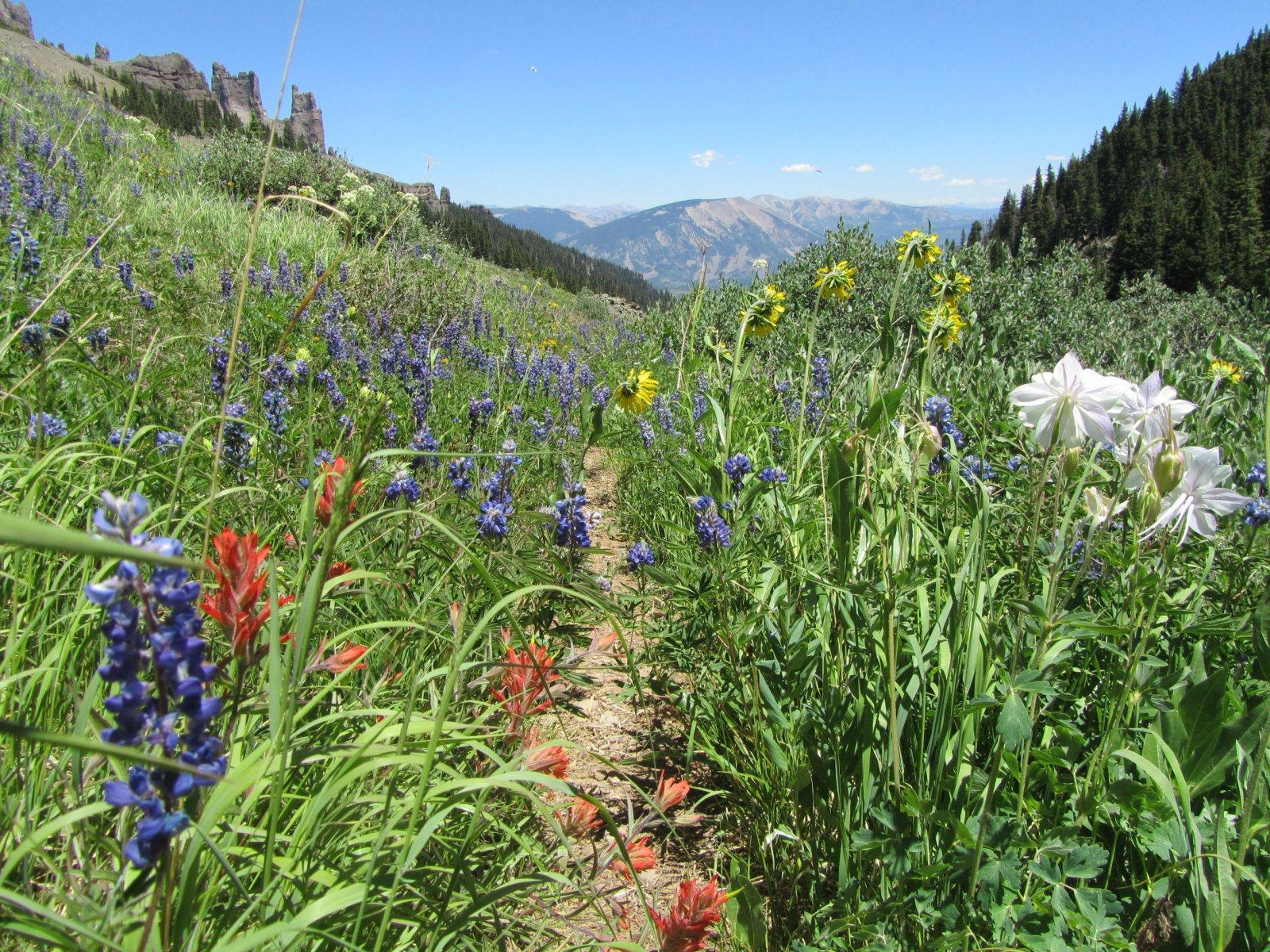 West Elk Wilderness Backpack  July 1-2,2018 058.jpg