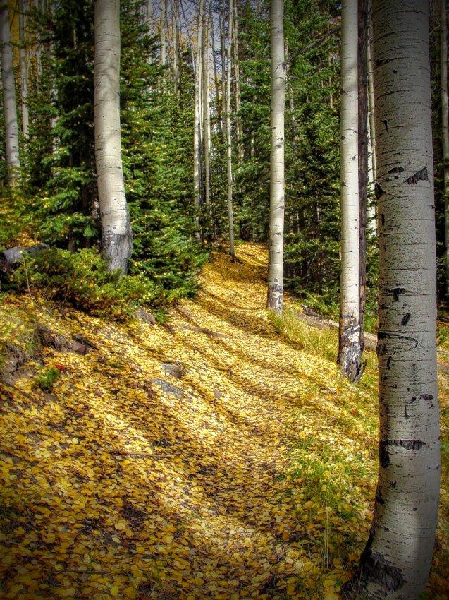 West Elk Wilderness - Mill Castle Trail.jpg