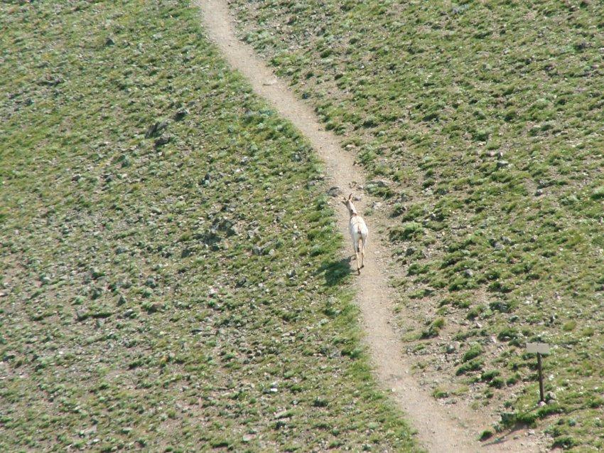 Yellowstone 08\' 115.jpg