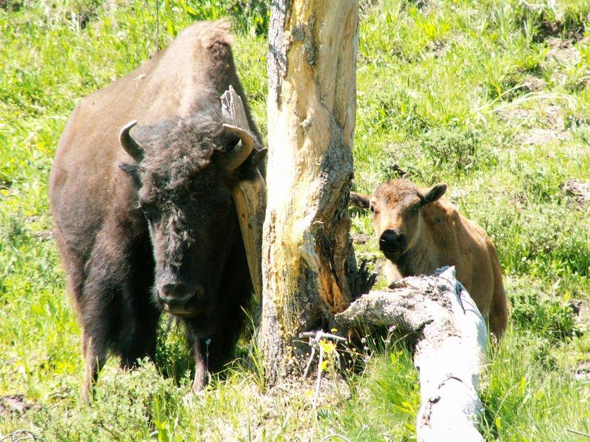 Yellowstone 08\' 133.jpg