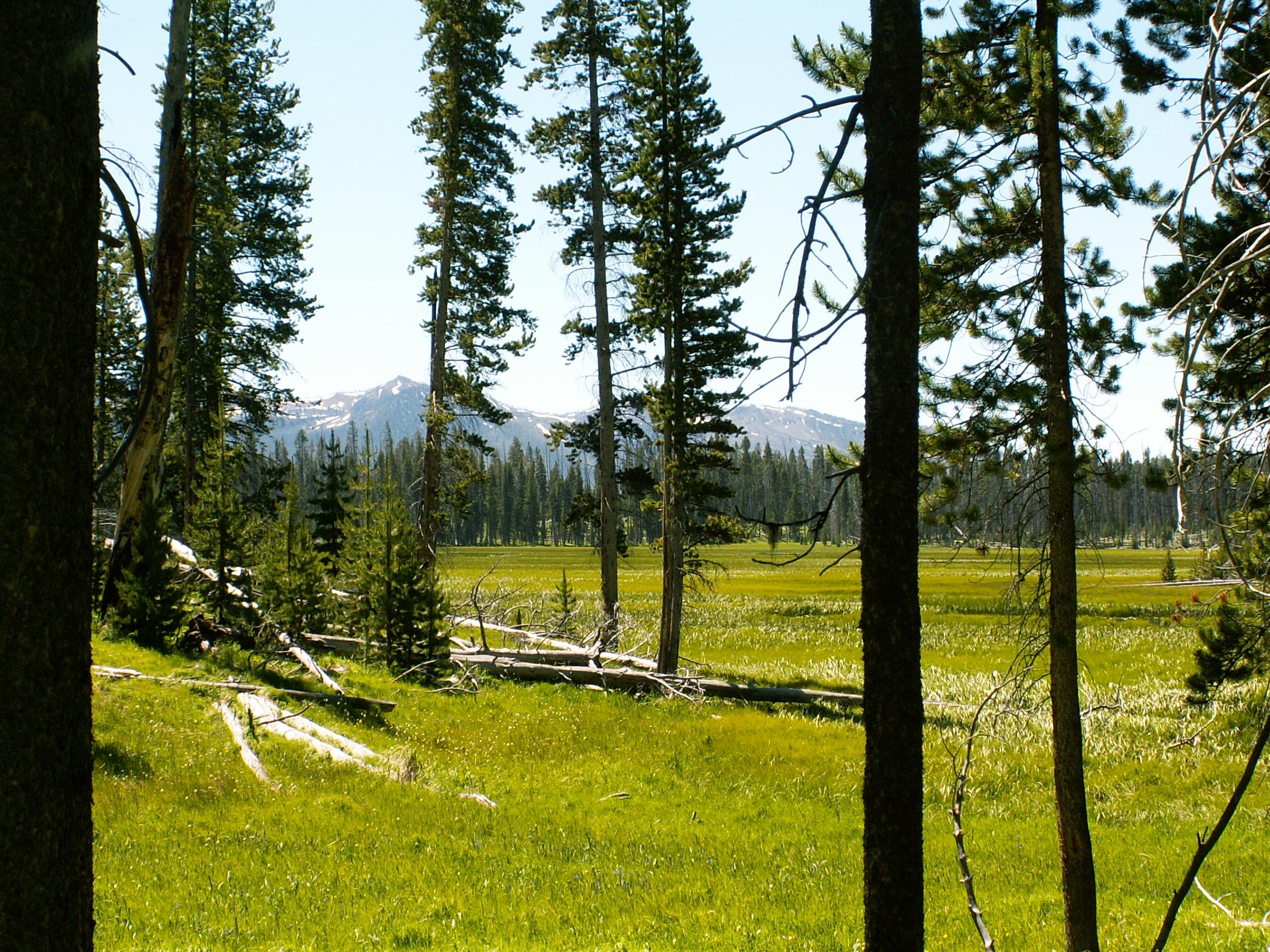 Yellowstone 2010\' 003.jpg