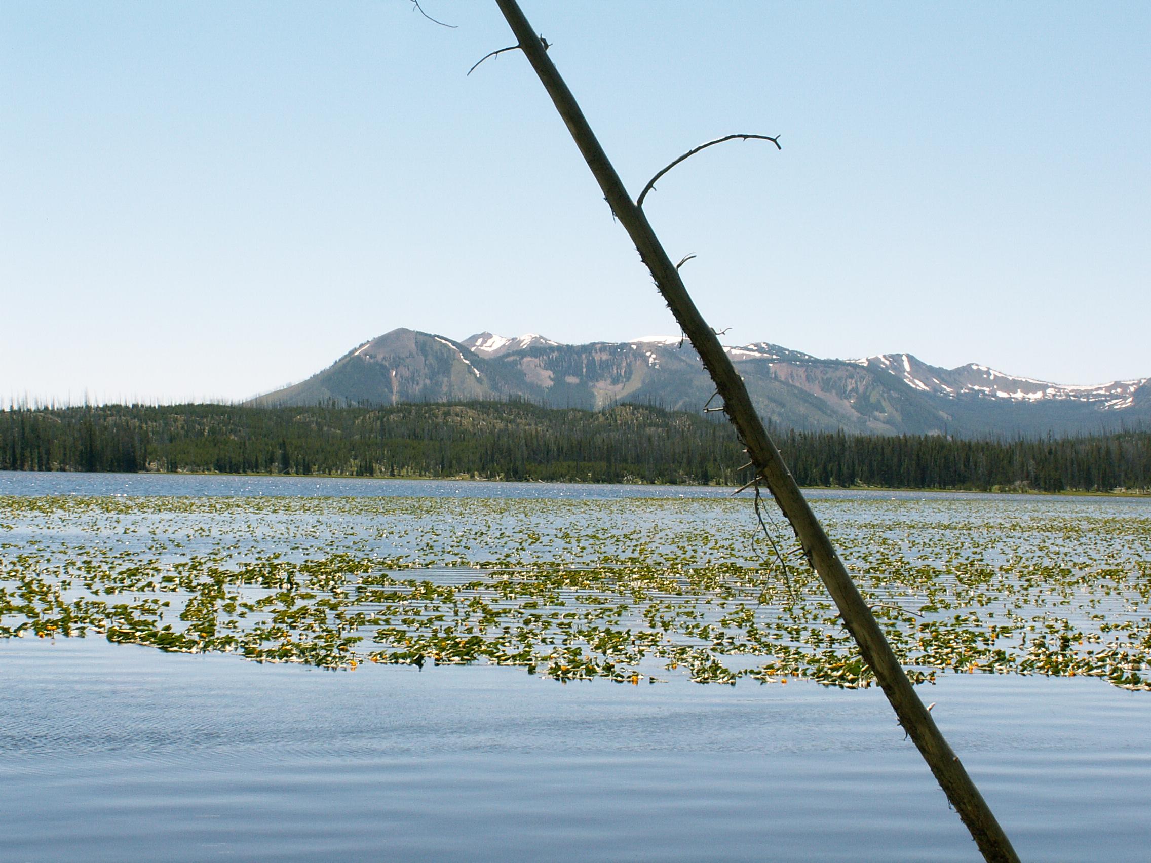 Yellowstone 2010\' 008.jpg