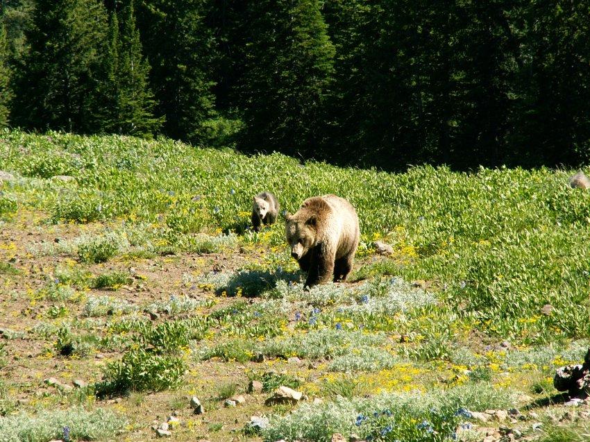 Yellowstone 2010\' 018.jpg