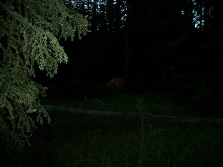 Yellowstone July 2012 341.JPG