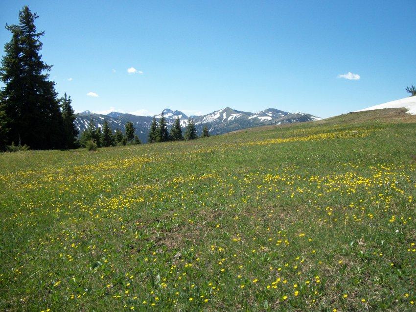 Yellowstone July 2012 438.JPG