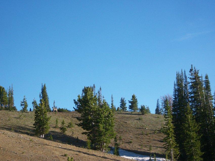 Yellowstone July 2012 576.JPG
