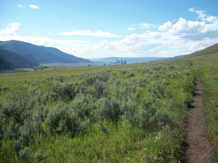 Yellowstone July 2012 643.JPG