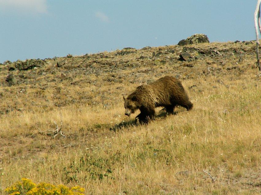 Yellowstone_07__153.jpg