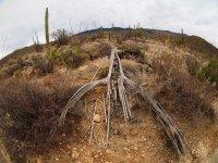 garwood4-P2144153.jpg