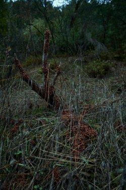 01.21 Stevens Trail 3.jpg